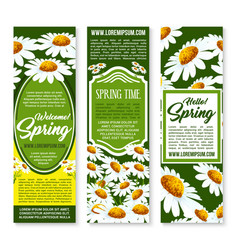 Spring flower banner with daisy floral background vector