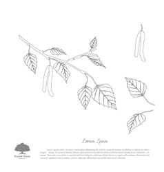 The contour image of birch branches vector