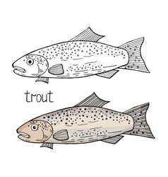 trout fish black and white and color vector image