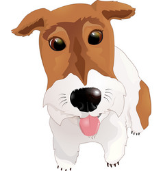 fox terrier sticking his tongue out vector image