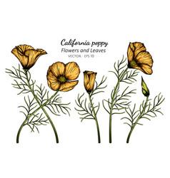 Orange california poppy flower and leaf drawing vector
