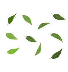 set of green tree leaves vector image