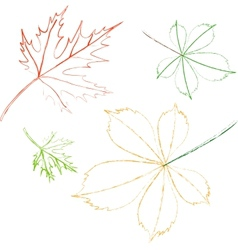 contoured leaves vector image vector image