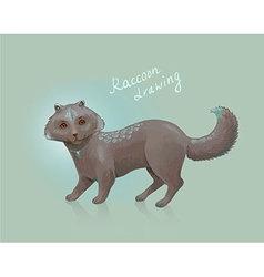 raccoon drawing vector image