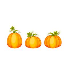 Cartoon pumpkin big fresh pumpkin vector