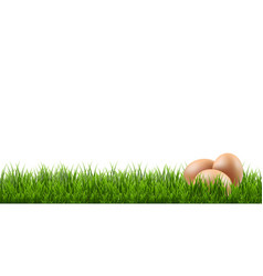 Eggs with grass border vector