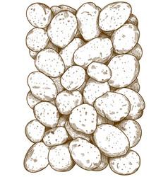 engraving potatoes pattern vector image