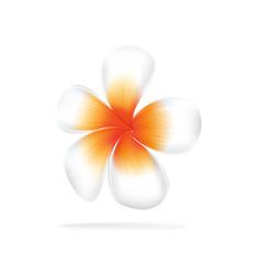 hawaii flower frangipani white plumeria vector image