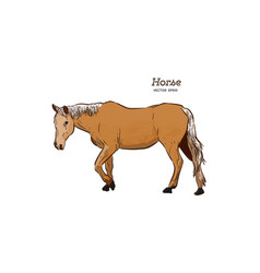 horse hand draw sketch vector image