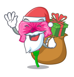 Santa with gift petunia in a mascot flower basket vector