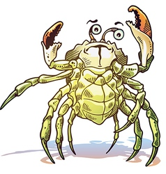 Sea Crab vector image