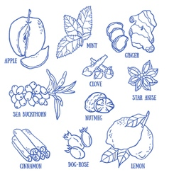Set of spices berries and fruits vector image