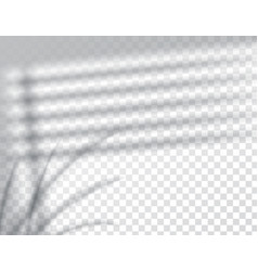shadows overlay effects mock up window jalousie vector image