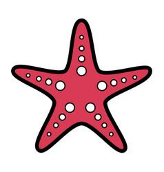 starfish animal wildlife ocean tropical vector image