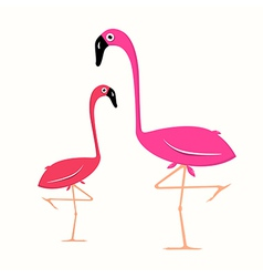 Two Flamingo on White Background vector image