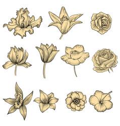 Flowers vintage floral set vector