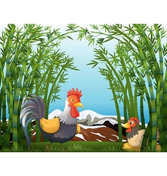 A rooster and a hen at the rainforest vector image