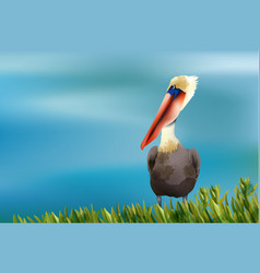 Colorful pelican sitting in grass on ocean vector