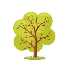 large tree with bright green leaves agricultural vector image