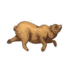 Soaring brown bear wild animal jumping vector