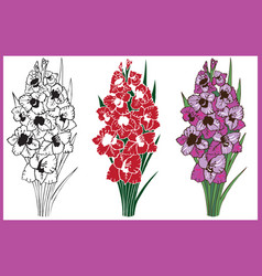 bouquet of flowers gladiolus vector image vector image