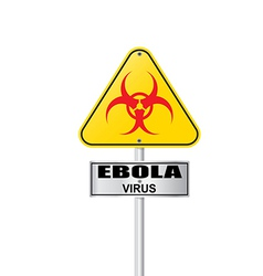 ebola virus vector image