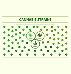 Cannabis strains horizontal infographic vector