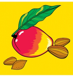 mango and almond vector image