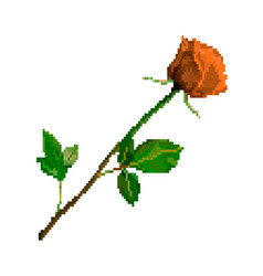 pixel art rose flower isolated on white background vector image