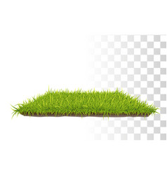 retangle carpet of grass vector image