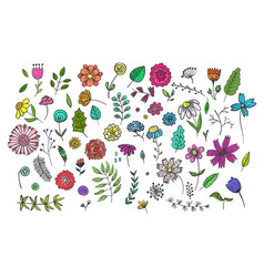 set of cute hand drawn colorful flowers and herbs vector image