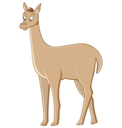 vicuna vector image