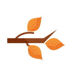 autumn branch tree leaves foliage nature flat icon vector image
