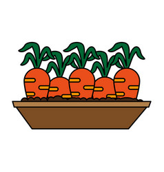 Carrots growing in land icon image vector
