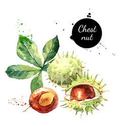 Hand drawn watercolor painting of chestnut vector