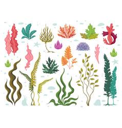 seaweeds sea underwater plants ocean coral reef vector image