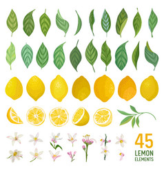 watercolor elements lemons leaves and flowers vector image