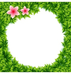 Fresh green leaves and tropical flowers frame vector image vector image