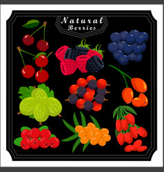 The theme set fruits vector