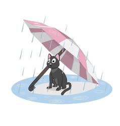 cat under an umbrella rain vector image