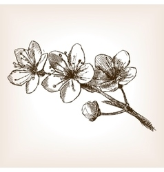 Cherry blossom hand drawn sketch vector