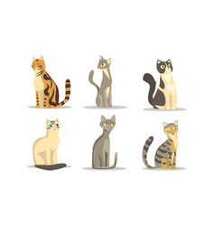 Collection different cats breeds lovely vector