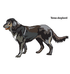 dog shepherd vector image
