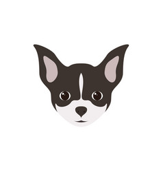 Portrait of chihuahua puppy simple dog vector