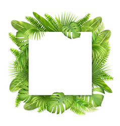 square card with tropical leaves vector image