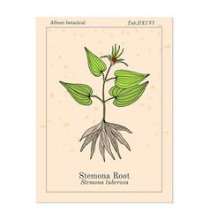 Stemona tuberosa medicinal plant vector