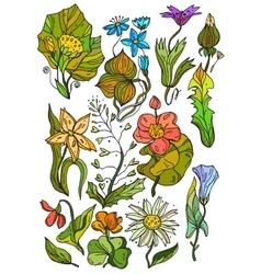 Hand Drawn bright floral elements vector image