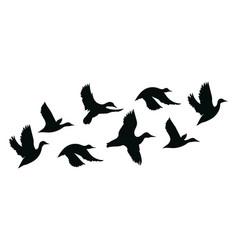 flock ducks a cartoon birds vector image