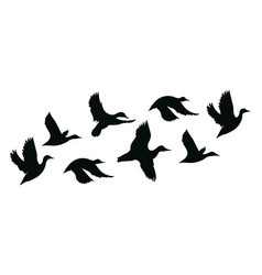 flock ducks a cartoon flock birds vector image