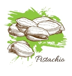 Hand drawn Pistachios vector